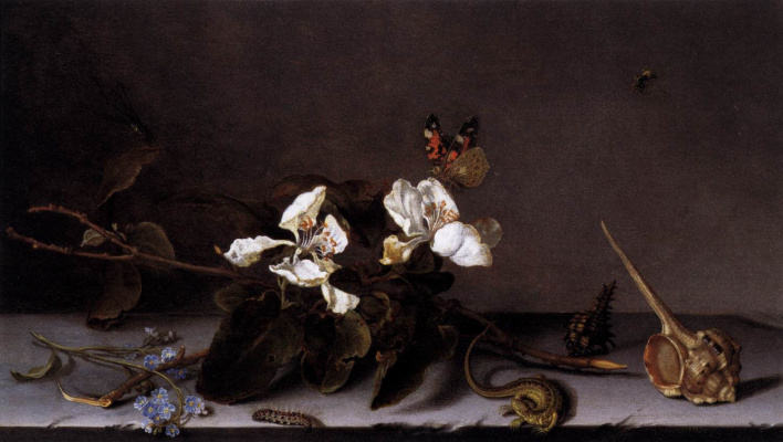 Baltazar van der Ast. The butterfly and the branch of Apple blossoms