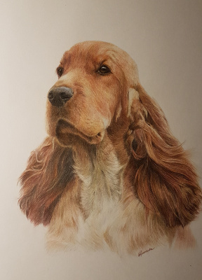 Irina Kryuchkov. English Cocker Spaniel