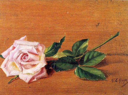 Джордж Нойес. Роза