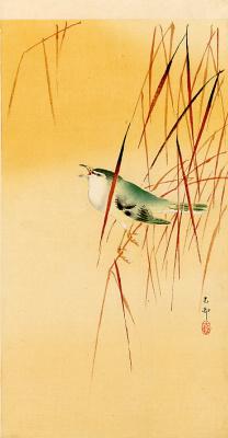 Ohara Koson. Birds 71