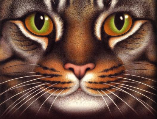 Никола Бейли. Кошачьи глаза