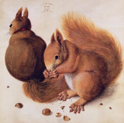 Albrecht Durer. Squirrels