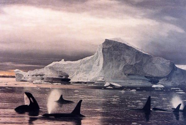 Лоренцо Фрачетти. Морской волк