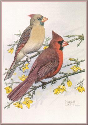 Меррелл Батлер. Северные кардиналы