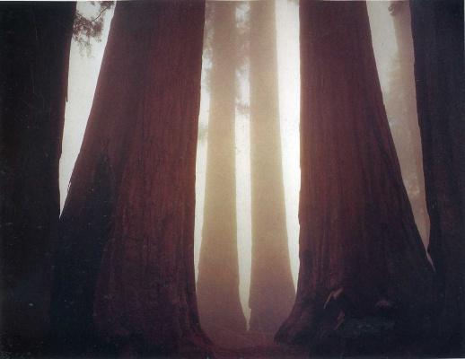 Дэвид Мюнх. Лучи солнца в лесу