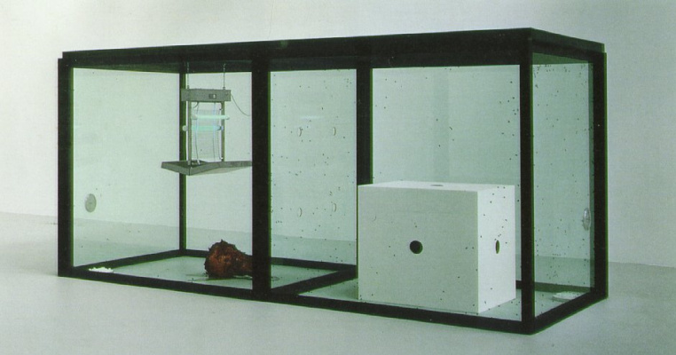 Damien Hirst. The conditions for life