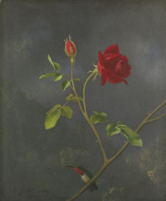 Martin Johnson Head. Red rose and ruby hummingbird