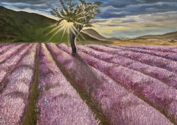 Elpis Pani. Lavender field
