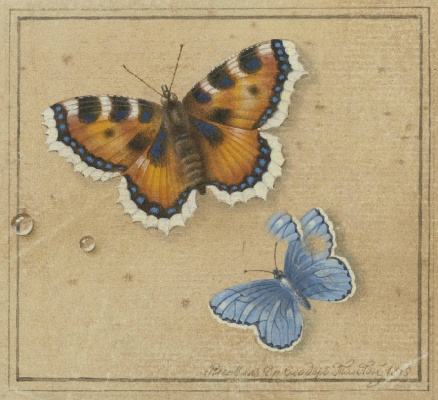 Fedor Petrovich Tolstoy. Butterfly
