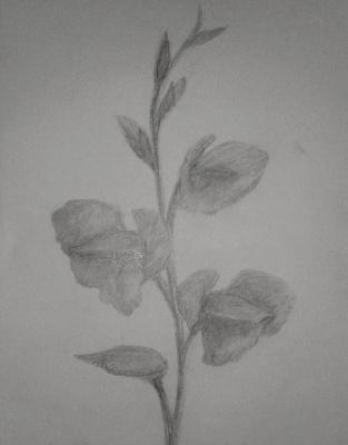 Zina Vladimirovna Parisva. Flowers No. 1