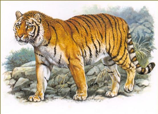 Роберт Даллет. Каспийский тигр