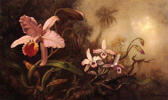 Мартин Джонсон Хед. Жук на листе орхидеи