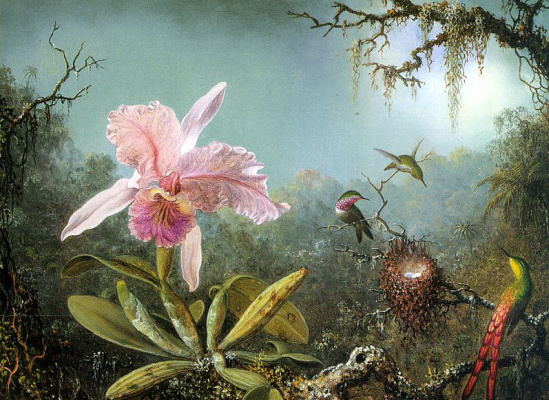 Мартин Джонсон Хед. Цветок