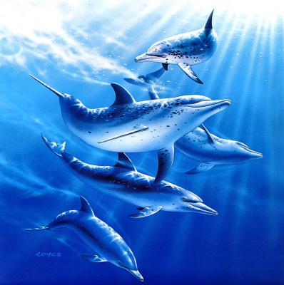 Ройс Макклюр. Дельфины 8