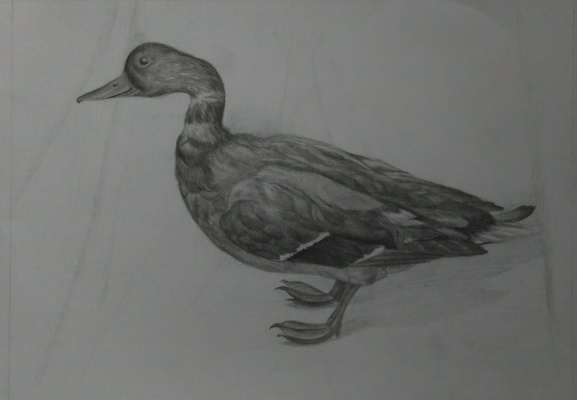 Lyudmila Kachur. Duck