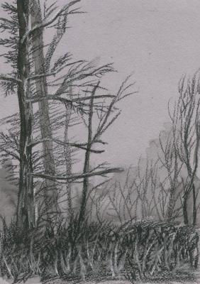 Marina Bocharova. Forest edge