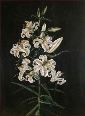 Marianna North. Japanese lily