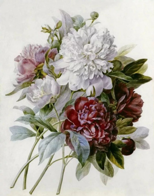 Pierre-Joseph Redoute. Bouquet: red, pink and white peonies