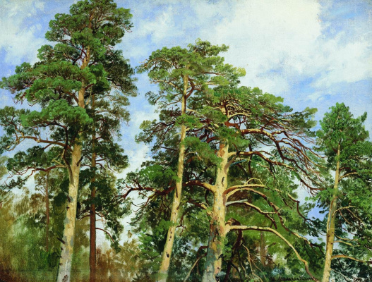 Ivan Ivanovich Shishkin. The tops of the pines