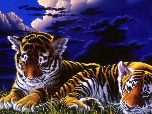 Шим Шиммель. Тигры