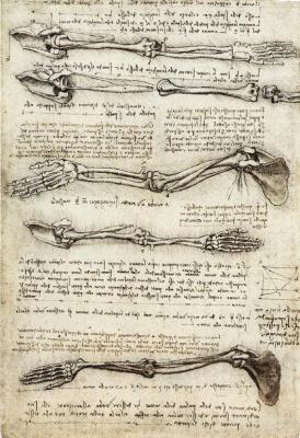 Леонардо да Винчи. Рука в движении