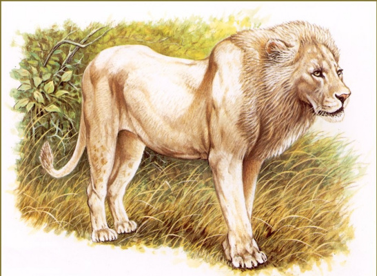 Роберт Даллет. Белый лев