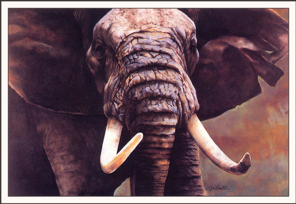Джанет Хитон. Слон