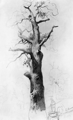 Fedor Alexandrovich Vasilyev. The trunk of an old oak. Sketch