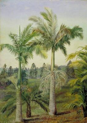 Марианна Норт. Ботанический сад Брисбена, Австралия
