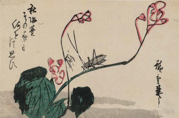 Утагава Хиросигэ. Кузнечик и бегония