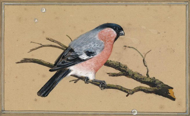 Fedor Petrovich Tolstoy. Bullfinch on the branch
