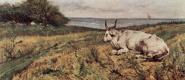Джованни Фаттори. Лежащая корова