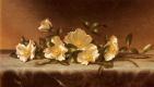 Мартин Джонсон Хед. Розы чероки на светло-серой ткани