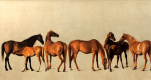 Джордж Стаббс. Лошади и жеребята без фона