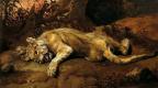 Франс Снейдерс. Раненый лев