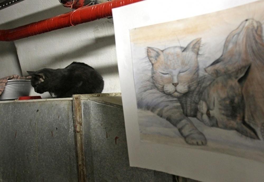 Искусство - кошкам: голландский художник Эрик ван Лисхаут устроил перформанс с мяукающими хранителями Эрмитаже