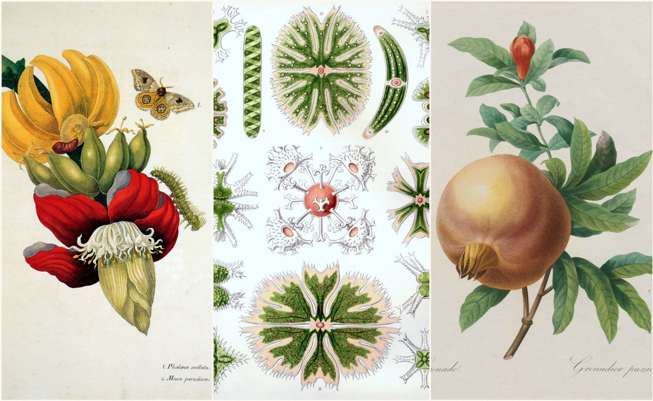 You reap what you sow: 500 years of botanical illustration