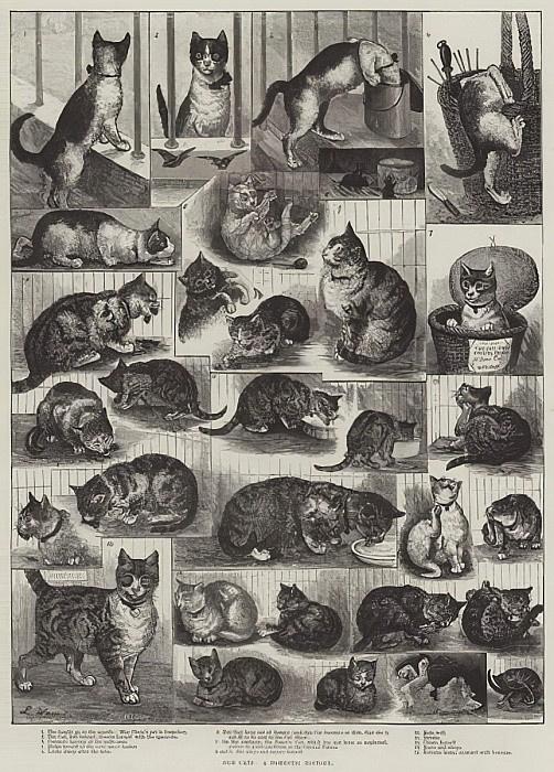 Луис Уэйн, «Наши котики. Домашняя история» (1884). Питер изображён на фрагментах с первого по пятый
