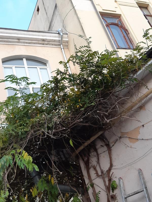 """В настоящее время упомянутых в книге балконных решеток с вензелями уже нет, а из наследия """"времен Эф"""