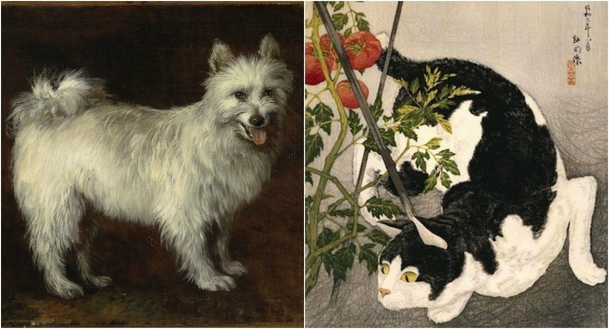 Кошки против собак: вечная тема на выставке в Техасе