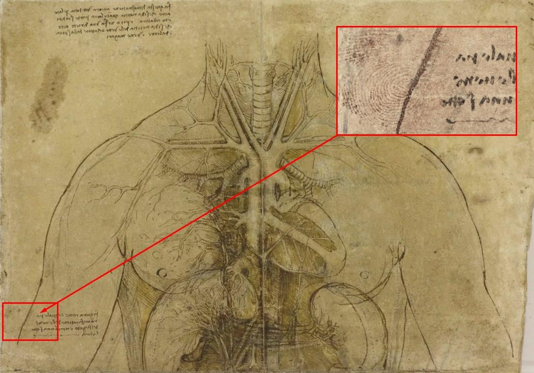 Отпечаток пальца Леонардо да Винчи обнаружен на рисунке из Королевской коллекции