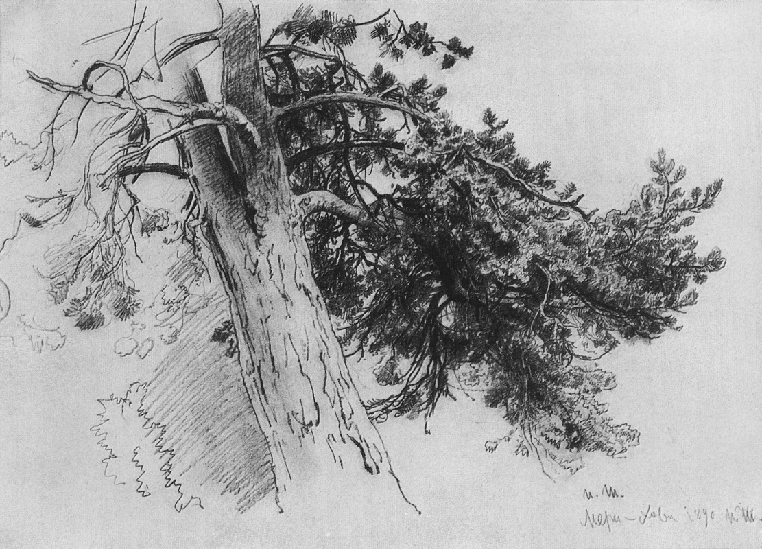 Ivan Shishkin. Part of the trunk of a pine