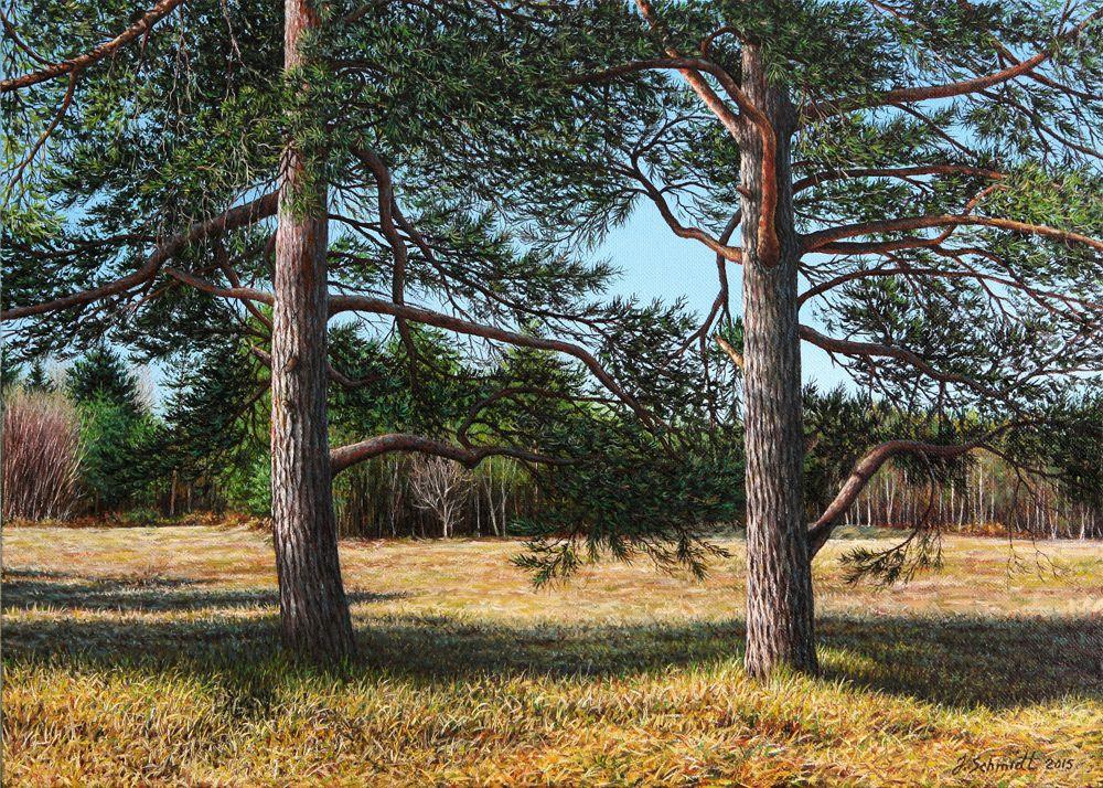 Юрген Шмидт. Meadow with pine trees