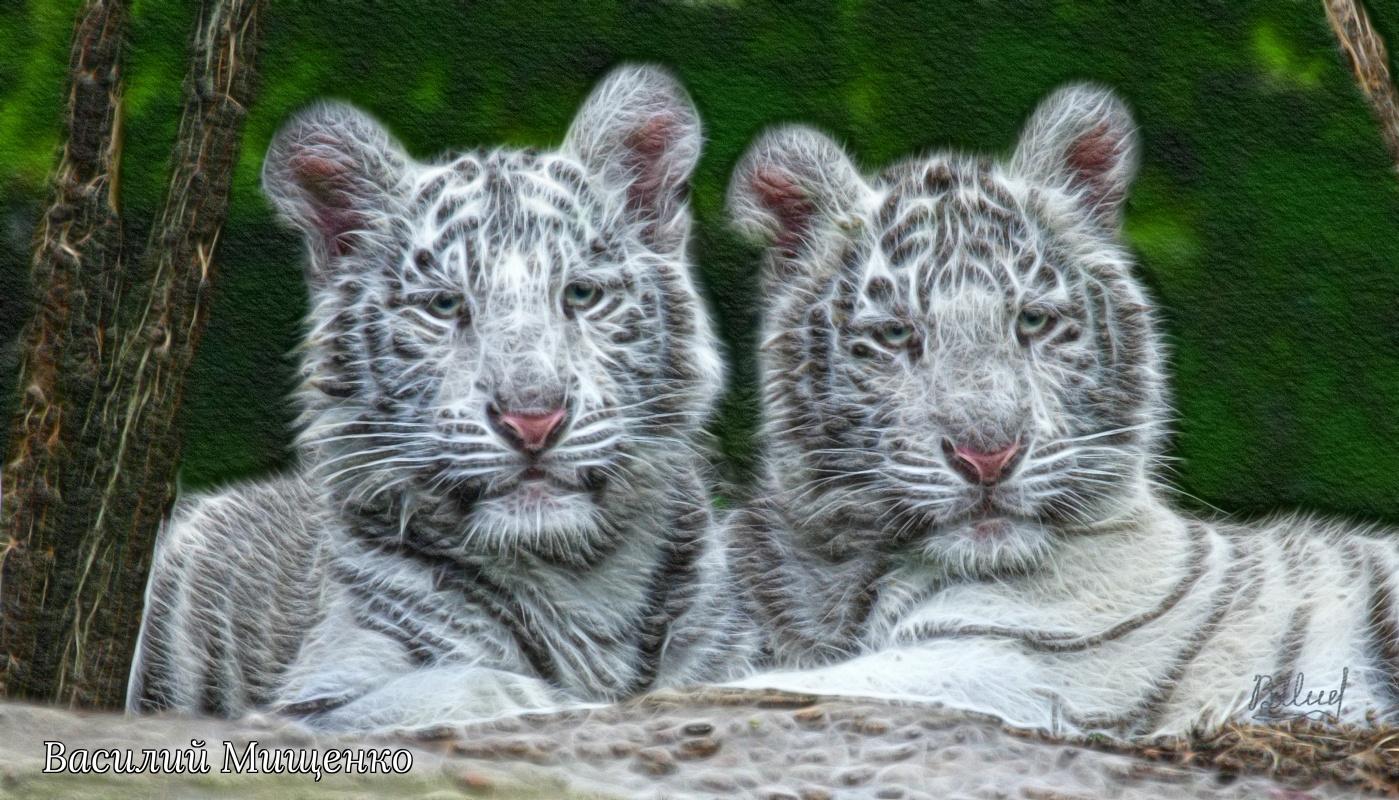 Vasiliy Mishchenko. Bengal cubs