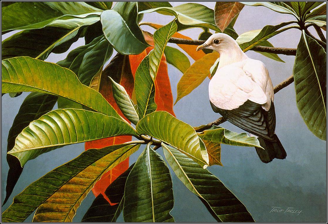 Пенни Олсен. Белый голубь
