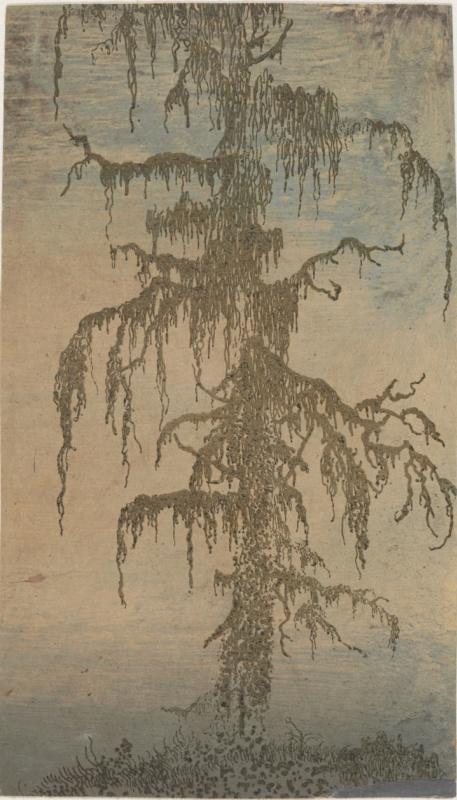 Геркулес Сегерс. Дерево во мхе