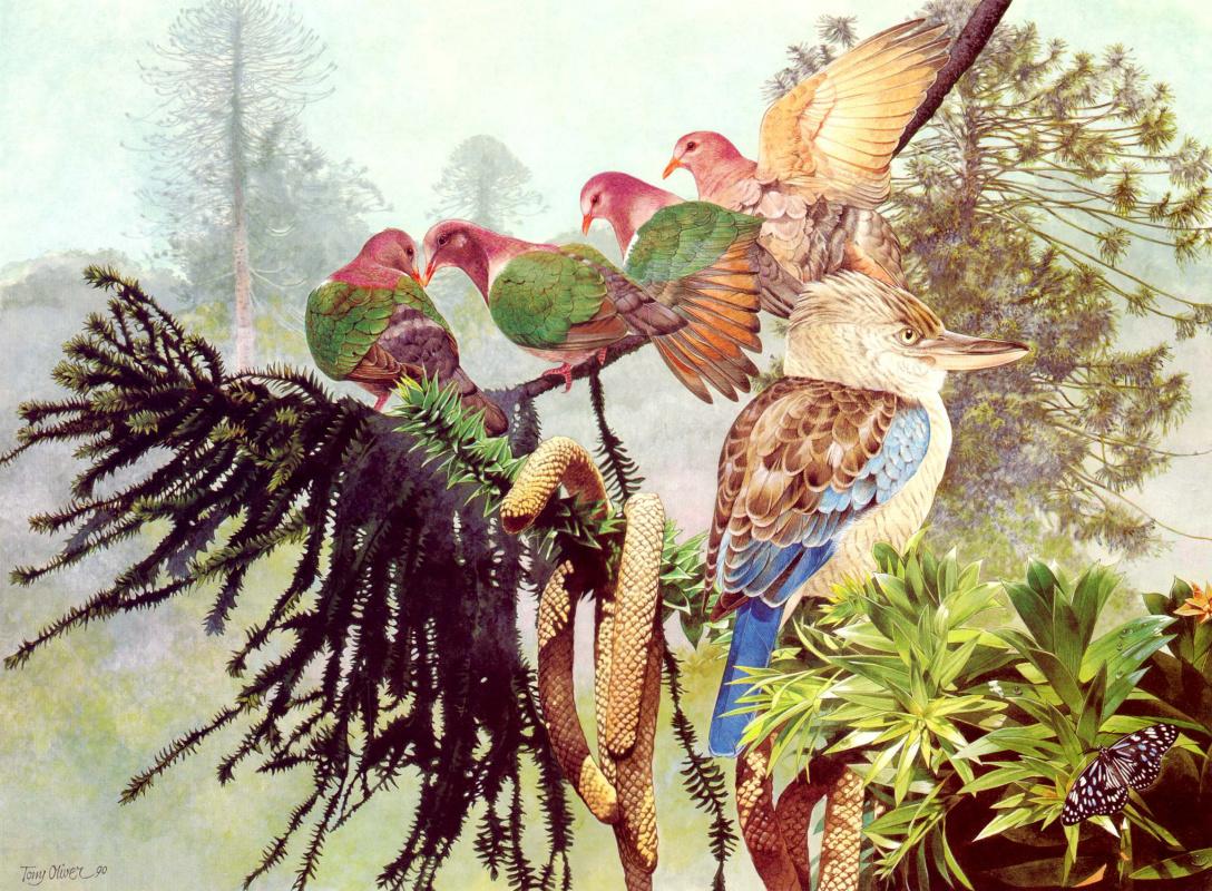 Toni Oliver. Blue-winged Kookaburra
