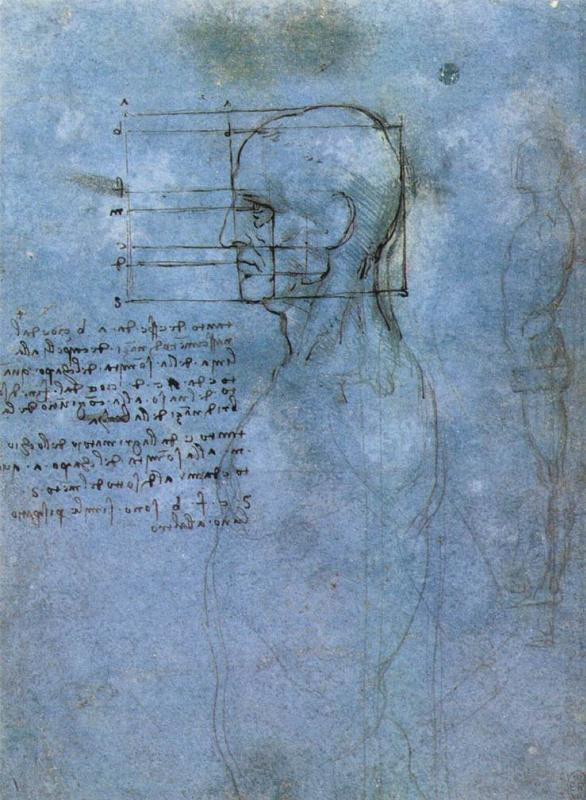 Леонардо да Винчи. Пропорции головы