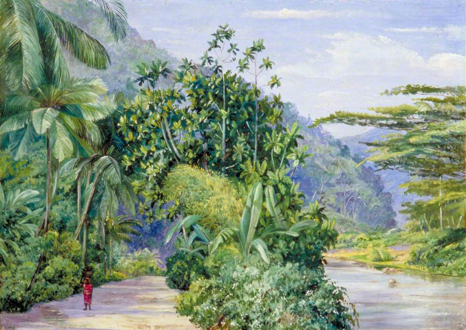 Marianna North. Road along the marshes and tropical trees, Jamaica