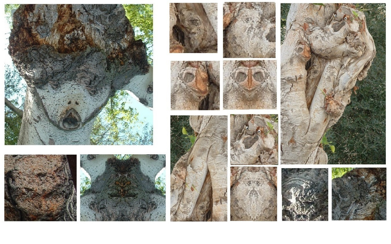Mark Goldfine. Images in trees